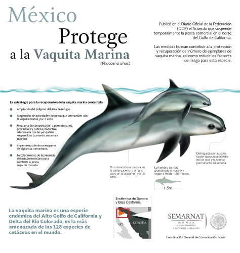 Infografía-Vaquita-Marina-02-Semarnat.jpg